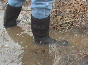 wish I had muck boots like these.