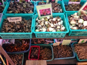 flower bulbs. but recommend not packing them for travel